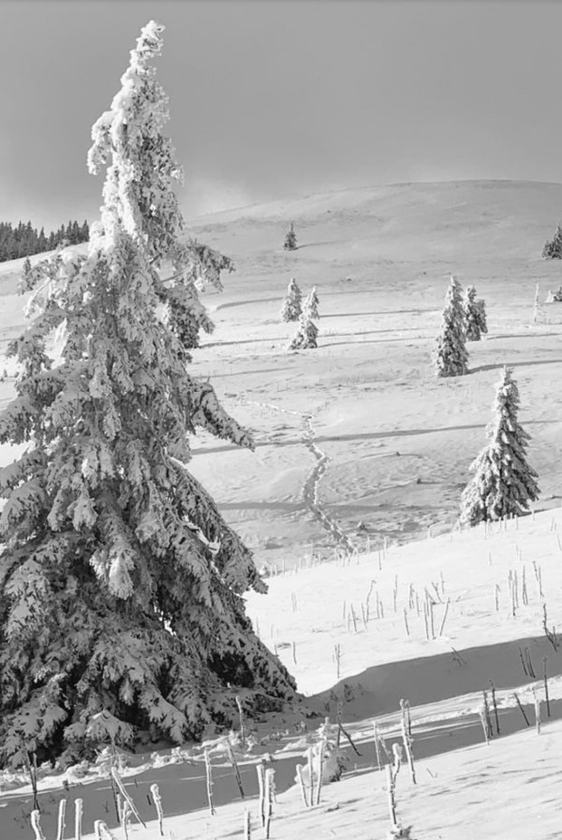 Fotospots im Schnee: Weiße endlose Flächen mit idyllischen Nadelbäumen auf dem Feldberg im Schwarzwaldrzwald