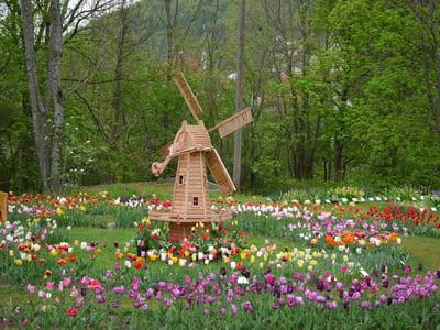 Tulpenfelder in Deutschland - Samen-Fetzer in Gönningen