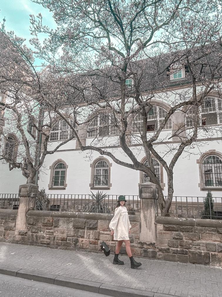 Fotospot-Speyer-Sehenswürdigkeit-Magnolienbäume