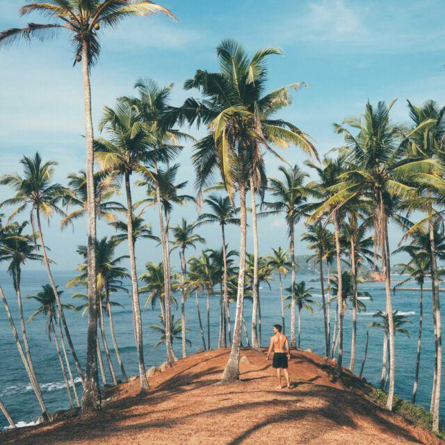 Find me under the palm tree. 🌴  #palmtrees  #palms #vacation #holiday #summervibes #vacationvibes #travelinspiration #travelphotography #explorebeaches #exploretheworld #wanderlust #digitalnomadlifestyle